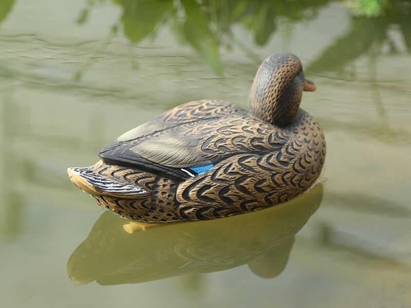 Пример водоплавающей утки